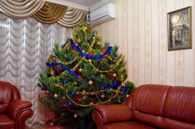 """Как правильно выбрать хорошую елку к Новому году 2019: советы"""""""