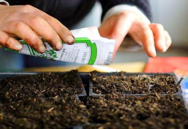 Когда сажать огурцы на рассаду в 2019 году: по лунному календарю в апреле