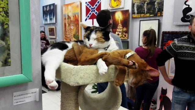 День эрмитажного кота в 2019 году: дата