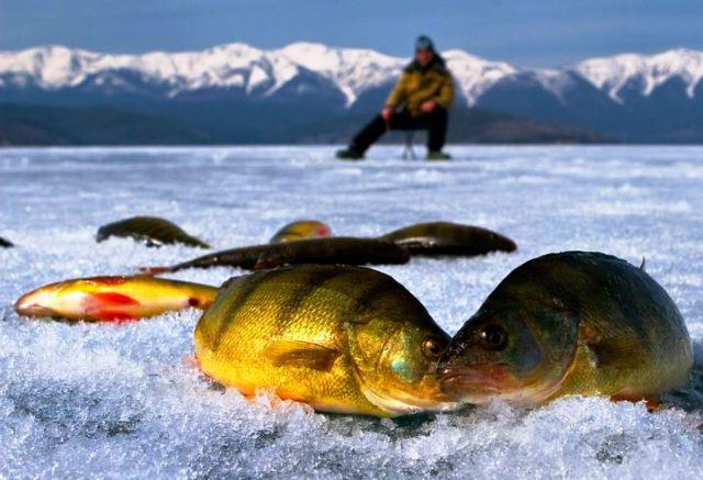 Новый закон о рыбалке в 2019 году: запреты, штрафы