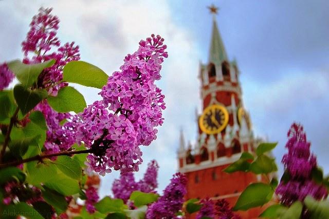 Погода на май 2019 в Москве и Московской области: прогноз